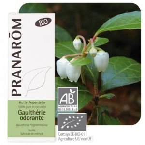 HE Gaulthérie couchée (Gaultheria procumbens) - 10 ml